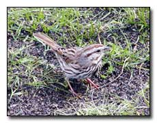 Sparrow Digital Photography � Outdoor Eyes