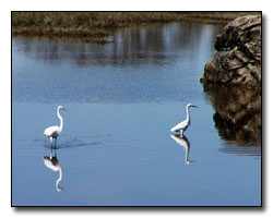 Egret Digital Photography � Outdoor Eyes
