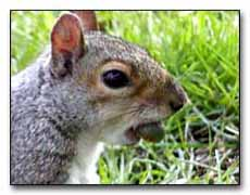Squirrel Digital Photography © Outdoor Eyes